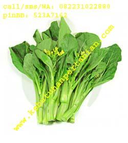 toko benih sayuran